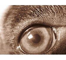 puppy eye Photographic Print