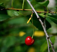 Country Cherry by KatrinKirieshka