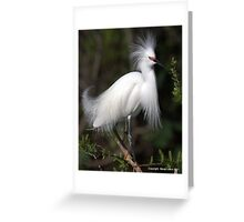 Snowy Egret Show Off 1 Greeting Card