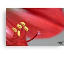 Macro Lilly-3 Canvas Print