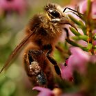 Honey Bee by Russell Couch