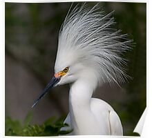 Snowy Egret Show Off 2 Poster