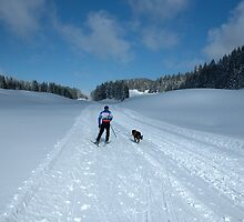cross country skiing by neil harrison