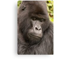 Close-up of silverback looking down in forest Canvas Print