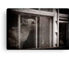 Doggy in the window Canvas Print