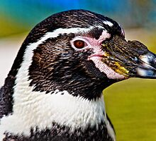 Penguin  by Selina Ryles