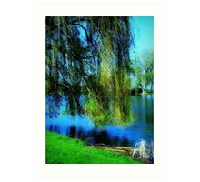 Beautiful weeping willow tree ©  Art Print