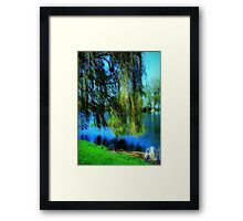 Beautiful weeping willow tree ©  Framed Print