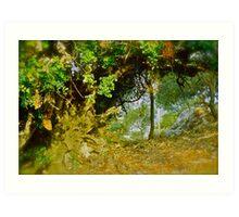 Quercus ilex . Corfu . Greece . by Brown Sugar . Views (103) thank you ! Art Print