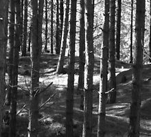 Into the woods, Newborough Beach. by velocitypink