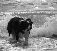 Collie Waves, Newborough Beach. by velocitypink