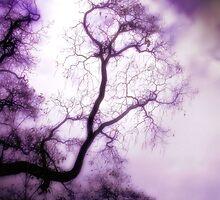 aloft by Heather King