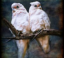 """Corellas In Love"" by Heather Thorning"