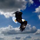 Eagle in Flight by Gary Smith