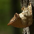 Young Dryad's Saddle - Ottawa, Ontario by Stephen Stephen