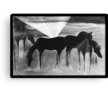 After the Gold Rush - Ghost Ponies Canvas Print