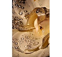 Golden jewels on a silky soft rose petal Photographic Print