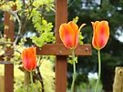 Spring Garden Tulips Grapevine Trellis art prints Baslee Troutman by BasleeArtPrints
