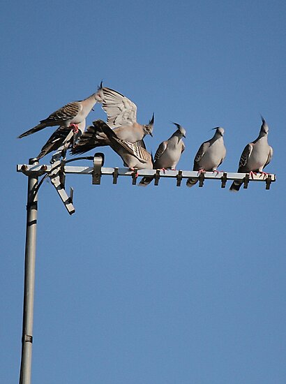 Birds On A Wire... err... Antenna by Amy Dee