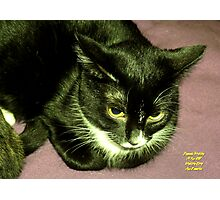 "IittyBitty Kitty sez: ""It's Doubtful"" Photographic Print"