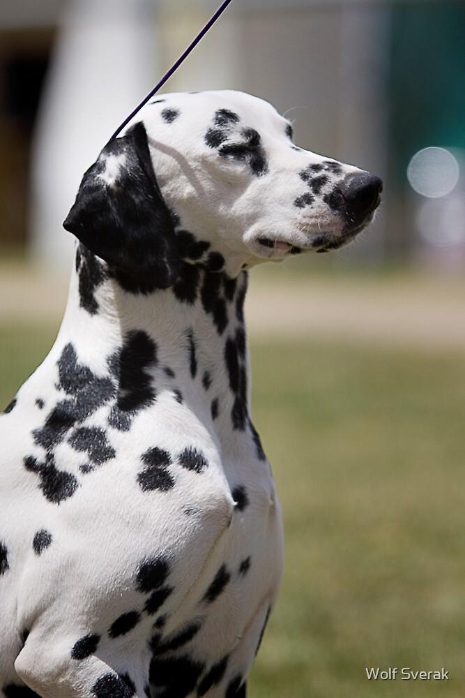 An attentive dog by Wolf Sverak
