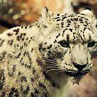 Snow Leopard by starbucksgirl26