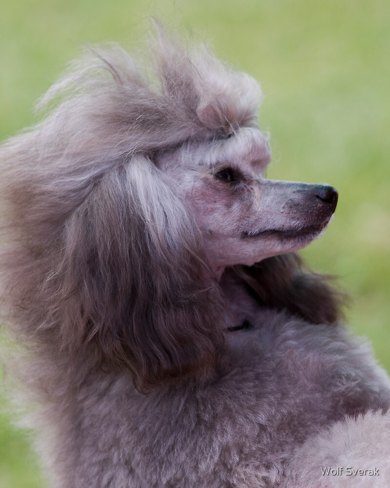 I just came back from the hairdresser! by Wolf Sverak