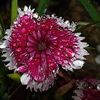 Bubbles on Flower by kennebrew