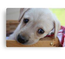 Puppy picnic Canvas Print
