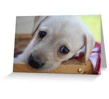 Puppy picnic Greeting Card