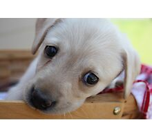 Puppy picnic Photographic Print