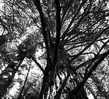 Branching Up by singularhiker