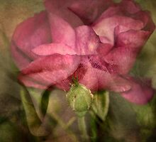 ~ Satin and Lace ~ by Lynda Heins