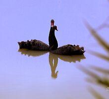 Be my shadow   by Brian Bo Mei