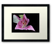 A messenger of Spring  Framed Print