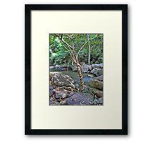 Tree strangles another tree Framed Print