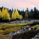 The Whisper of Larches   by Wayne King