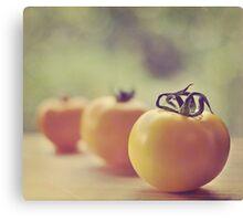 tomatoes.. Canvas Print