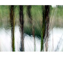 Reed Impression Photographic Print
