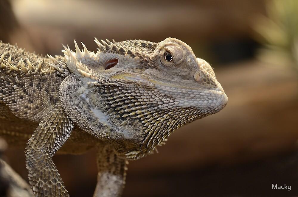 'The Lizard of OZ' by Macky