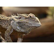 'The Lizard of OZ' Photographic Print