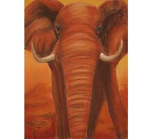 Posing Elephant Photographic Print