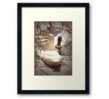 Two Little Ducks Framed Print