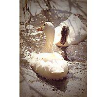 Two Little Ducks Photographic Print