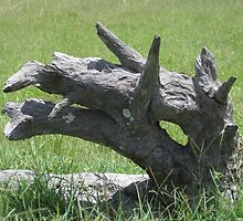 Wooden Dragon by Neil Ross