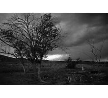 Lone Survivors Photographic Print