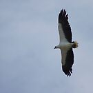 White Bellied Sea Eagle  by Margaret Stanton