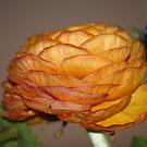 Petals II by vbk70