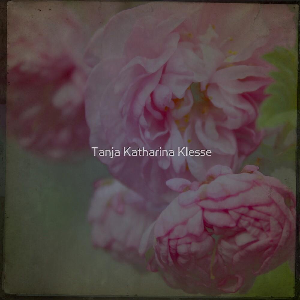 Almond blossom II by Tanja Katharina Klesse