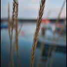 Straw on the bay by Chloé Ophelia Gorbulew